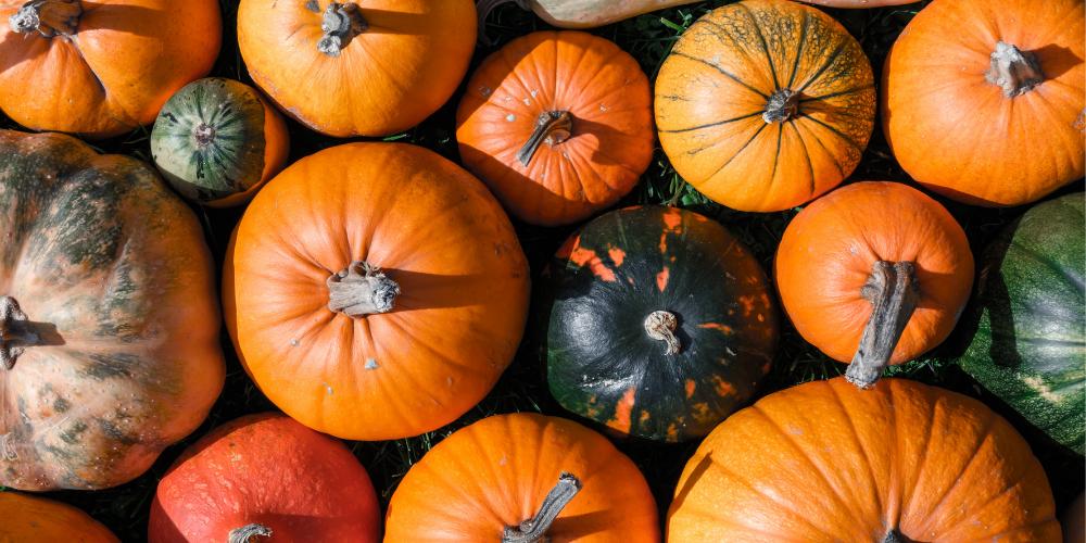 October's Newsletter